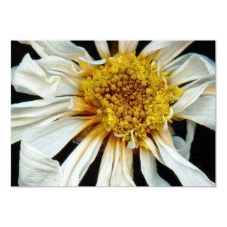 Flor - margarita - sol borracho comunicados personales