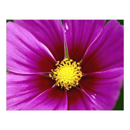 Flor, primer tarjetas informativas
