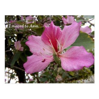Flor púrpura del árbol en la postal de Asia