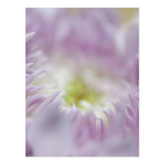 Flor púrpura en colores pastel postal