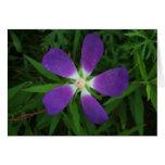 Flor que presenta como morada púrpura de la tarjeta de felicitación