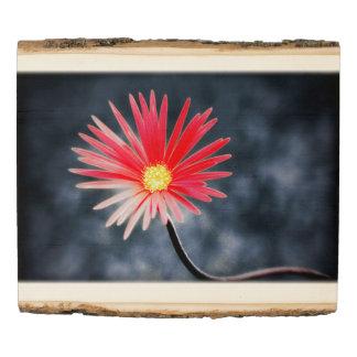 Flor roja #2 de la margarita panel de madera