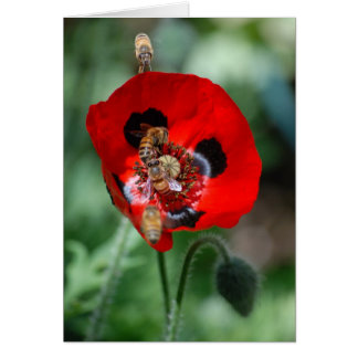 Flor roja de la amapola - invasión de la abeja tarjeta pequeña