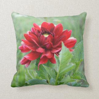 Flor roja de la dalia, almohada de tiro del