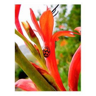 flor roja de la mariquita del legado móvil postal