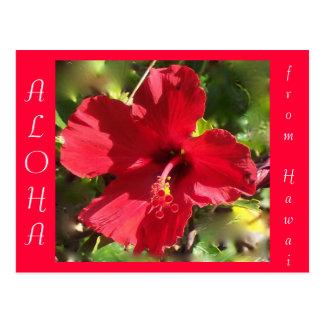 Flor roja del hibisco de la hawaiana hawaiana postal