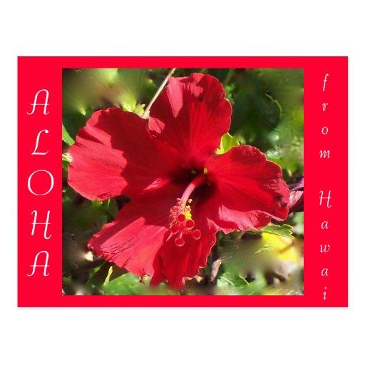 Flor roja del hibisco de la hawaiana hawaiana tarjeta postal