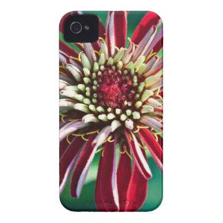 Flor roja (primer) iPhone 4 Case-Mate protectores