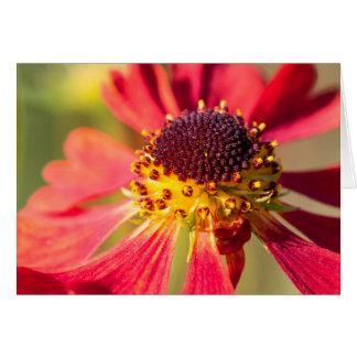 Flor roja y amarilla del cono, Echinacea Tarjeta De Felicitación