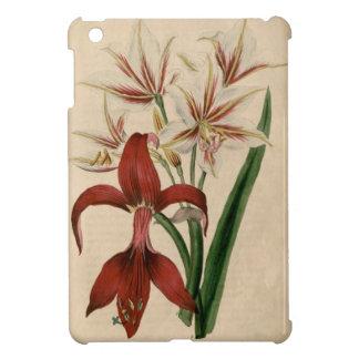 Flor roja y blanca del Amaryllis