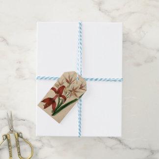 Flor roja y blanca del Amaryllis Etiquetas Para Regalos