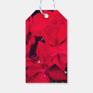 Flor rojo del geranio etiquetas para regalos
