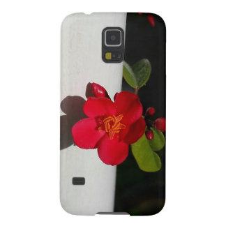 Flor rojo del jolopia contra B/W en la caja del Funda Galaxy S5