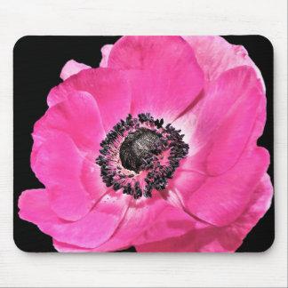Flor rosada de la anémona alfombrilla de ratón