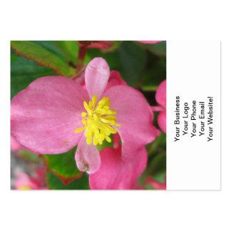 Flor rosada de la begonia tarjetas de visita grandes