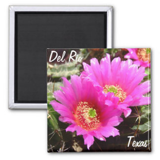 Flor rosada del cactus de los recuerdos de Del Río Imán Cuadrado