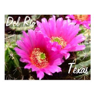 Flor rosada del cactus de los recuerdos de Del Río Postal