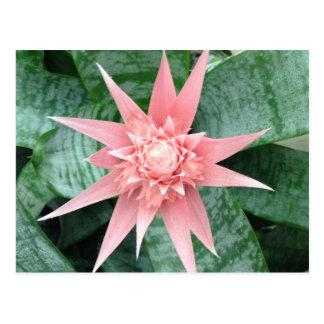 Flor rosada exótica de Bromeliad Postal