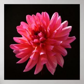 Flor rosada psicodélica de Fuchsiana de las karmas Póster