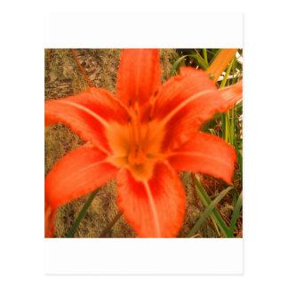 flor tropical preciosa postal