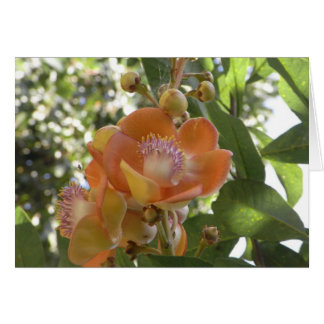 Flor tropical - tarjeta en blanco