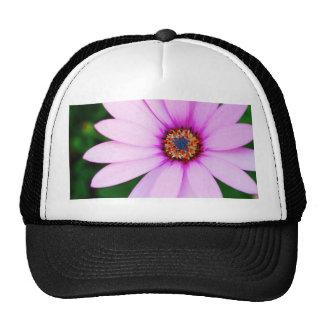 Flor violeta de la margarita gorros