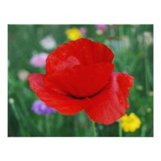 Flor y significado de la amapola comunicado