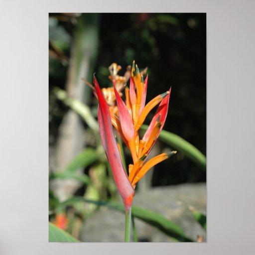 Flora de Hawaii Poster
