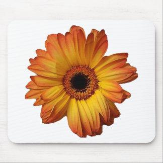 Floración anaranjada soleada de la flor del gerber alfombrilla de ratón