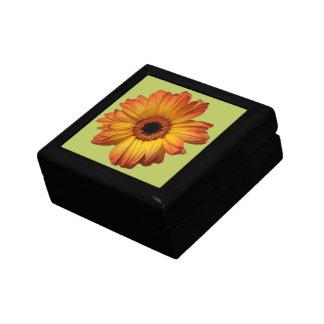 Floración anaranjada soleada de la flor del gerber caja de recuerdo