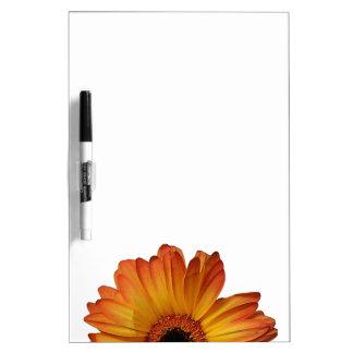 Floración anaranjada soleada de la flor del gerber tableros blancos