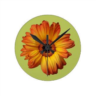 Floración anaranjada soleada de la flor del gerber reloj