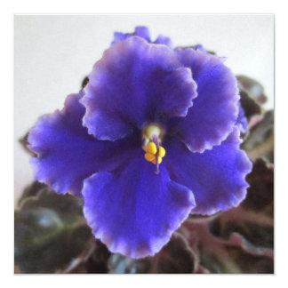 Floración de la violeta africana invitación 13,3 cm x 13,3cm