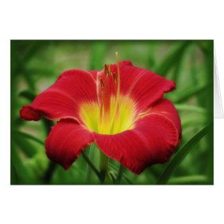 Floración del escarlata - Daylily Tarjeta De Felicitación