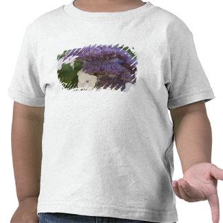 Floración del Hydrangea, jardín del chino del Dr. Camisetas