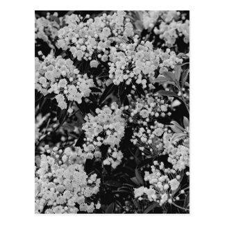 Floración del laurel de montaña postal