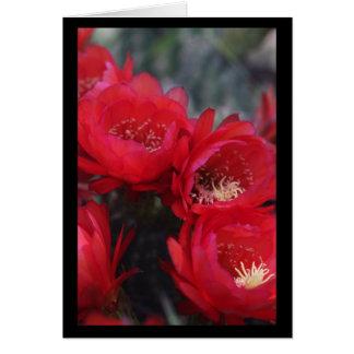 Floración roja del cactus tarjeta de felicitación