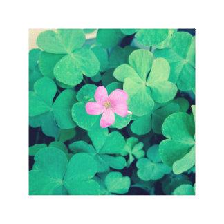 Floración rosada de la flor en tréboles lienzo