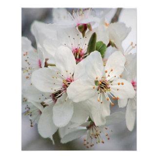 Floraciones blancas de la cereza folleto 11,4 x 14,2 cm