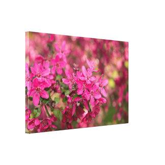 Floraciones de Apple de cangrejo Lona Estirada Galerías