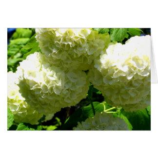 Floraciones de Bush de la bola de nieve Tarjeta De Felicitación