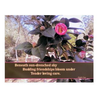 Floraciones de florecimiento de la amistad con el postal