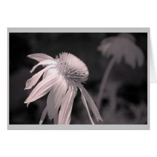 Floraciones del Echinacea Tarjeta