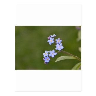 Floral azul elegante tarjetas postales