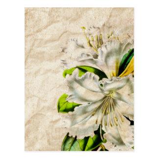 Floral botánico con clase femenino del vintage tarjetas postales