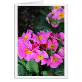 Floral rosado - cumpleaños de la cuñada tarjeta de felicitación