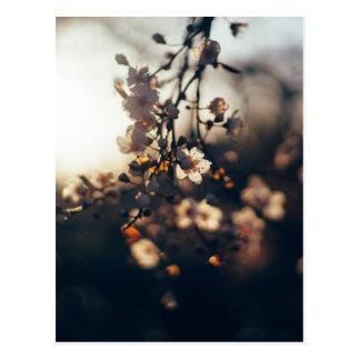 florece luz del sol de la gama de la puesta del postal