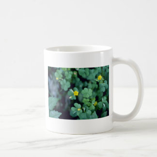 flores amarillas amarillas del Madera-Alazán (Oxal Taza De Café