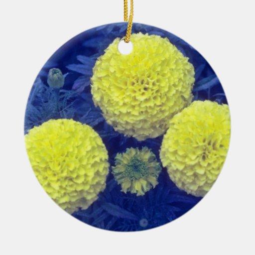 flores amarillas de la maravilla africana (Tagetes Ornamente De Reyes