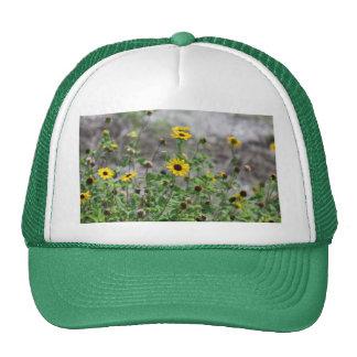 Flores amarillas de la margarita de los gorra